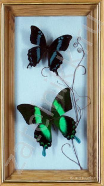 Необыкновенная композиция из бабочек Коллажи из бабочек